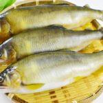 爆卵特級母香魚